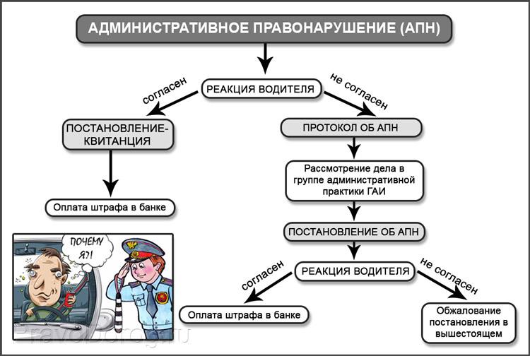 Разница между протоколом и постановлением